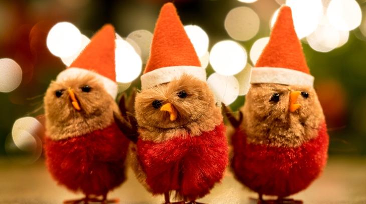 Natal Christmas Chicks Felicidade Poesia